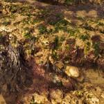 web_Pool_weeds1