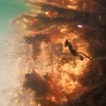 web_seahorse_seaweed_pipefish