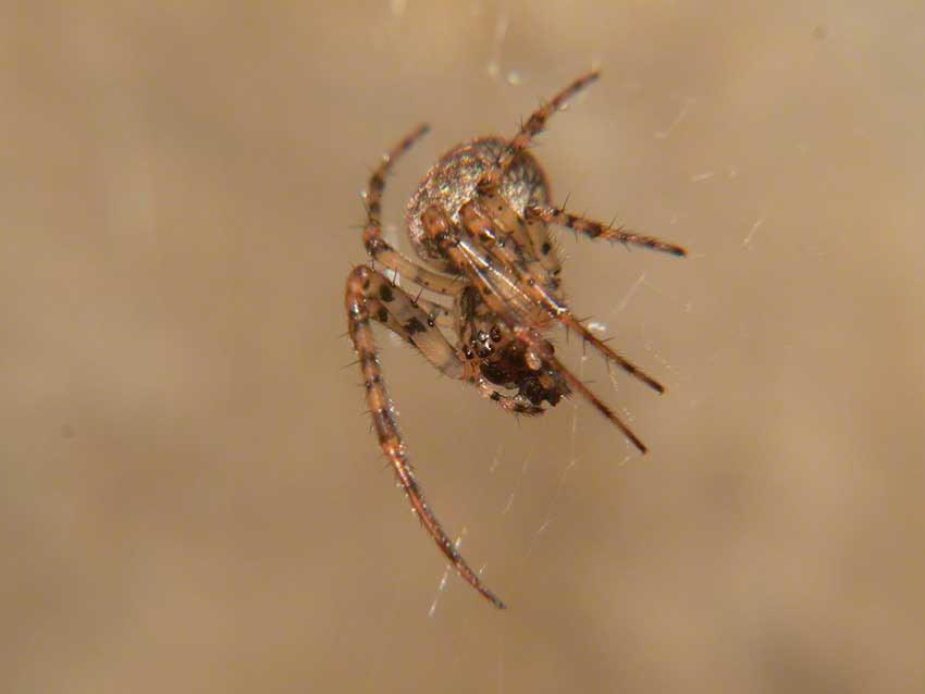 Spider in web close to the culvert ceiling.