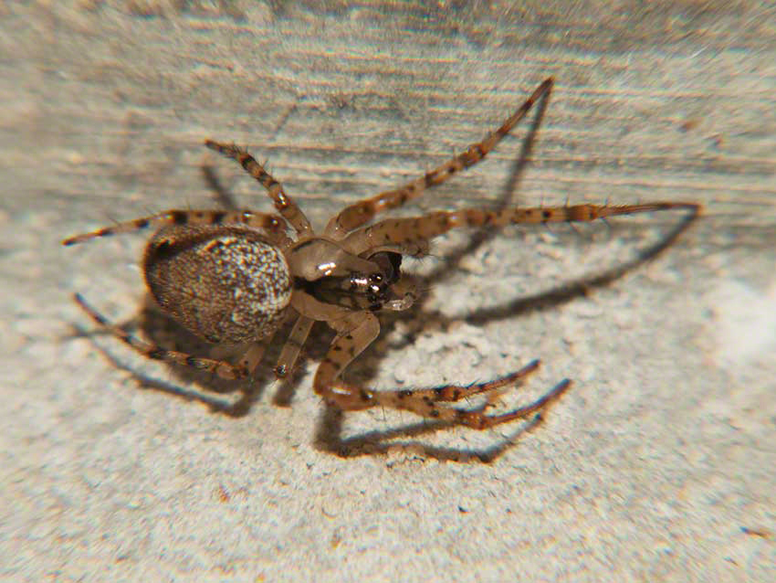 Spider in angle of wall and culvert ceiling.