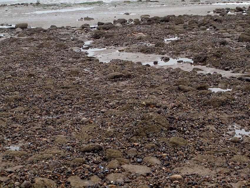 Upper shore cobbles, pebbles and mussels.