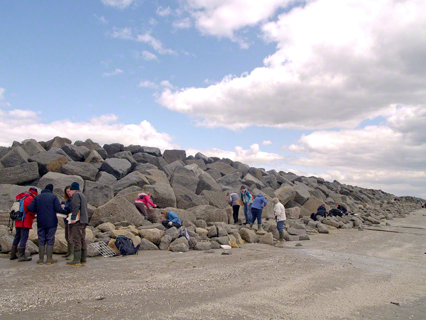 Volunteer surveyors