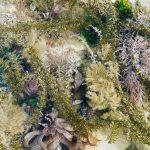 Rock pool with shingle and red seaweeds