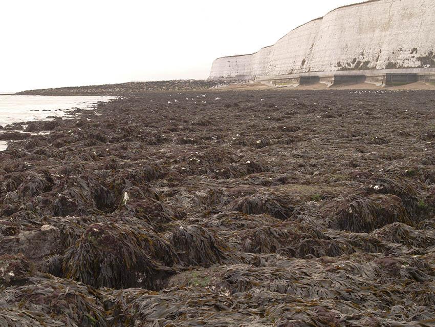 Saltdean beach west