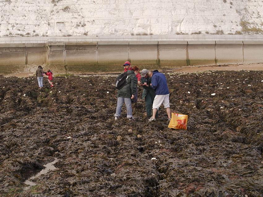 Volunteers surveying.