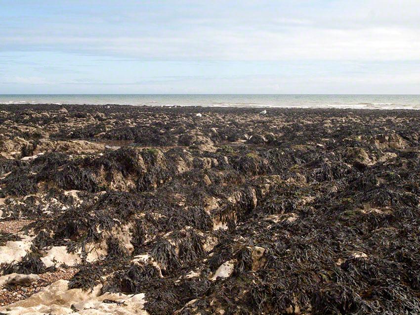 Saltdean beach viewed SSE across the wave-cut platform.